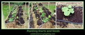 planting starts and seeds